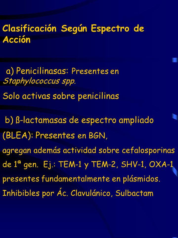 Clasificación Según Espectro de Acción a) Penicilinasas: Presentes en Staphylococcus spp. Solo activas sobre penicilinas b) ß-lactamasas de espectro a