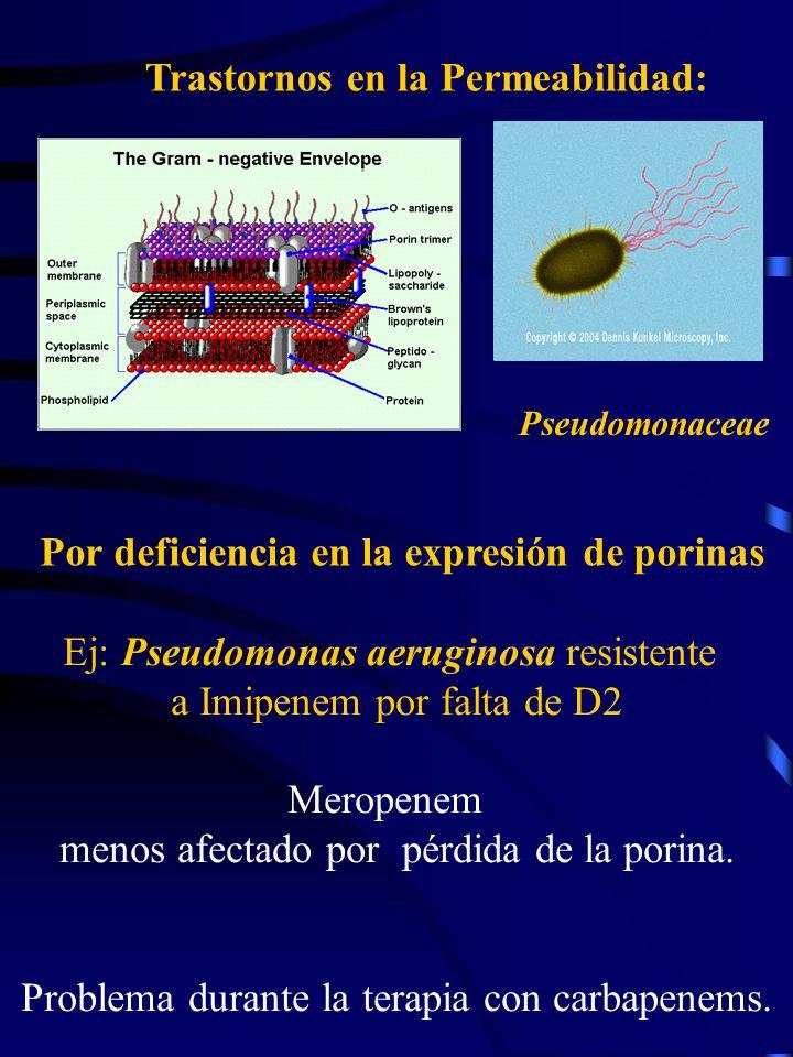 Trastornos en la Permeabilidad: Por deficiencia en la expresión de porinas Pseudomonaceae Ej: Pseudomonas aeruginosa resistente a Imipenem por falta d
