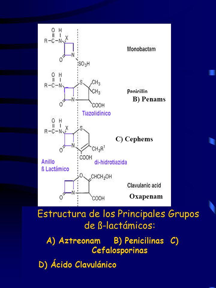 Estructura de los Principales Grupos de ß-lactámicos: A) Aztreonam B) Penicilinas C) Cefalosporinas D) Ácido Clavulánico A) B) Penams C) Cephems D) Ox