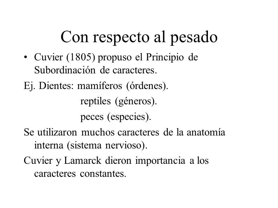 Con respecto al pesado Cuvier (1805) propuso el Principio de Subordinación de caracteres. Ej. Dientes: mamíferos (órdenes). reptiles (géneros). peces