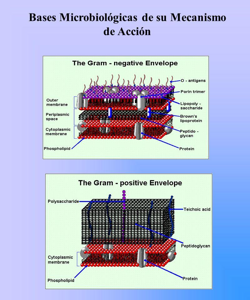 EFLUJO ACTIVO Genes mefE y mefA codifican para bombas de eflujo que determinan salida de macrólidos de 14 y 15 carbonos.