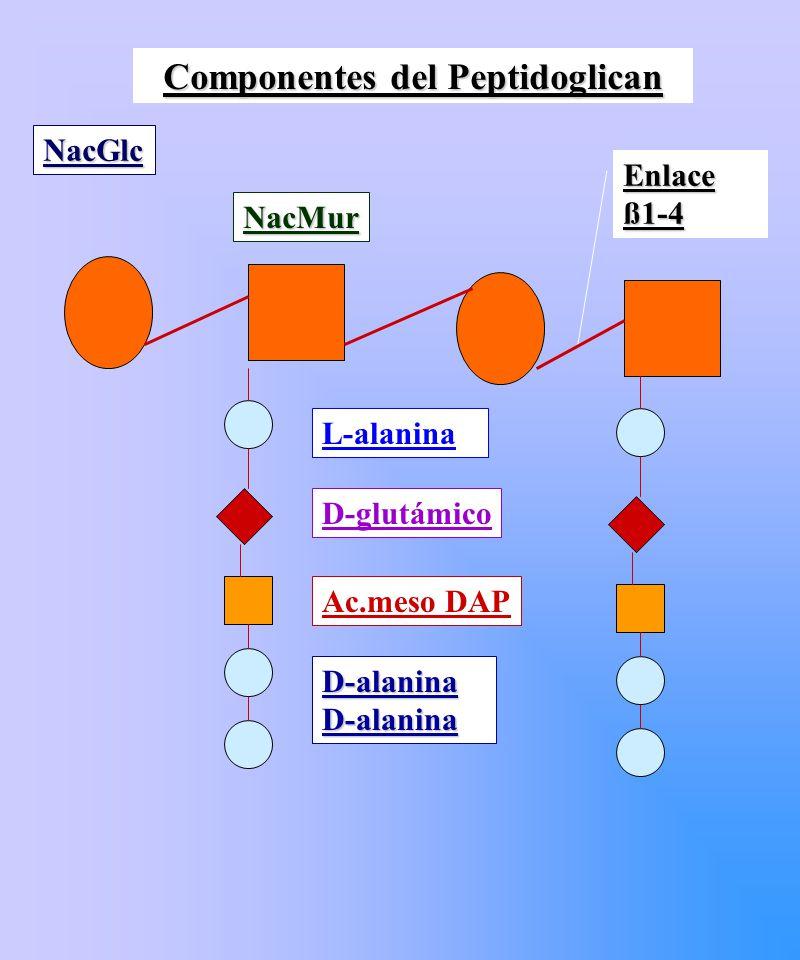 Espectro de acción: Q Enterobacterias y Pseudomonas: - permeabilidad disminuida modificable por pH.