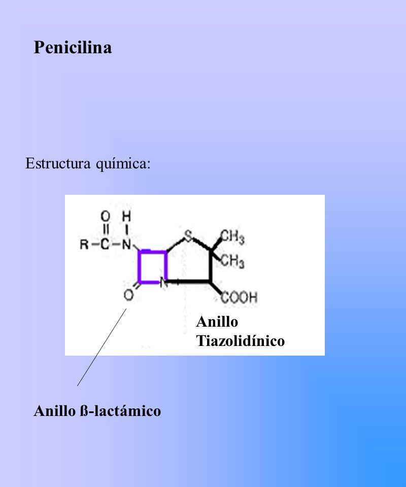 Cefalosporinas: 1ª Generación (Cefalotina, Cefradina) 2ª Generación (Cefuroxime) 3ª Generación (Ceftriaxona, Cefotaxime, Cetazidime) 4 a Generación Cefepime, Cefpodoxime