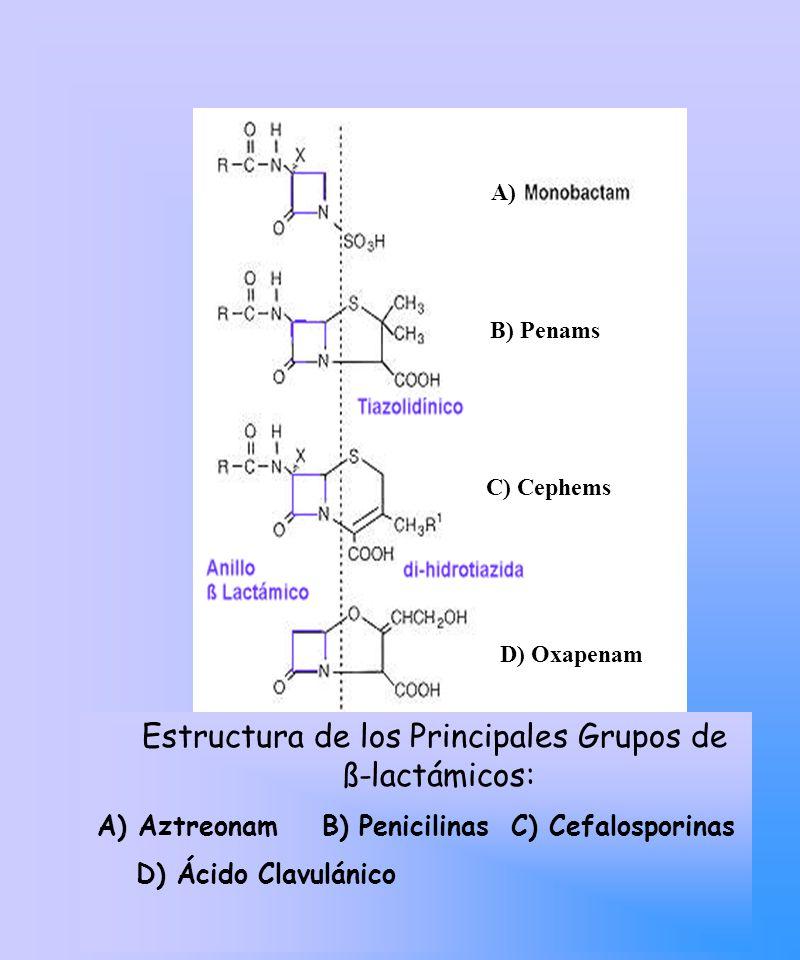 Betalactámicos: Mecanismo de Acción: Inactivación irreversible de Trenspeptidasas necesarias para el entrecruzamiento del Peptidoglicano Por similitud estereoquímica con el dipéptido terminal Dala-Dala.