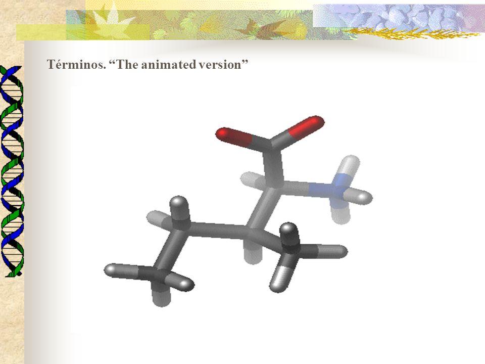 Términos. The animated version