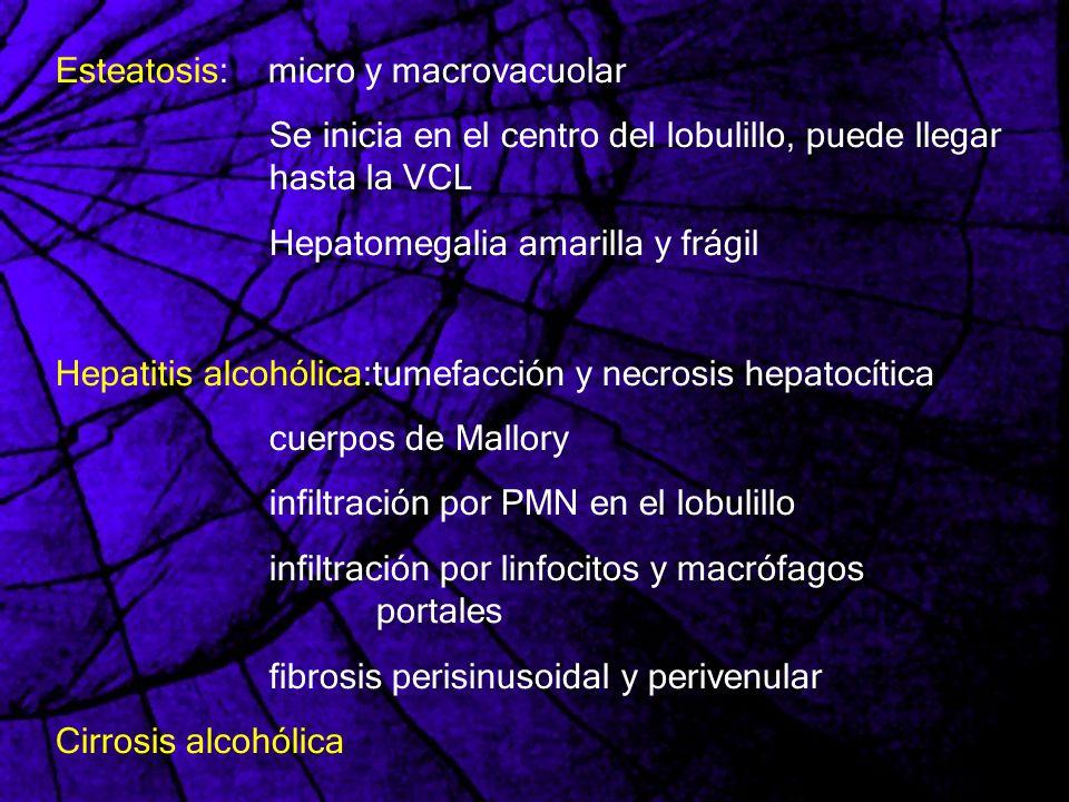 Esteatosis: micro y macrovacuolar Se inicia en el centro del lobulillo, puede llegar hasta la VCL Hepatomegalia amarilla y frágil Hepatitis alcohólica
