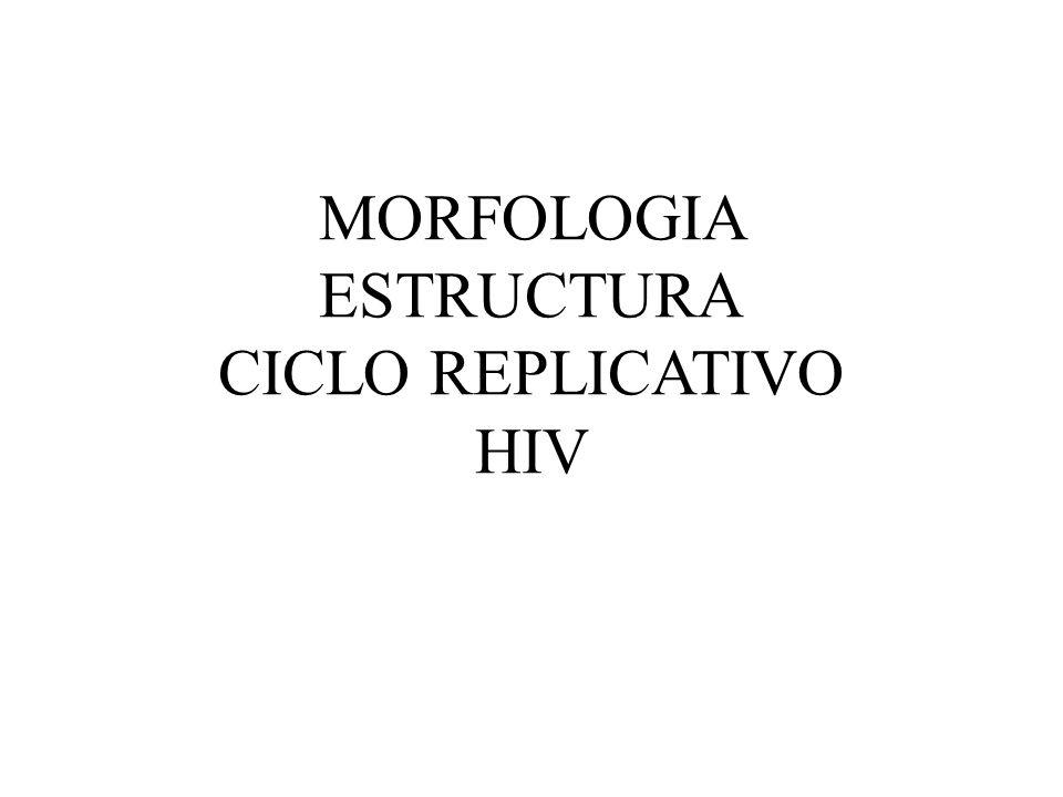 MORFOLOGIA ESTRUCTURA CICLO REPLICATIVO HIV