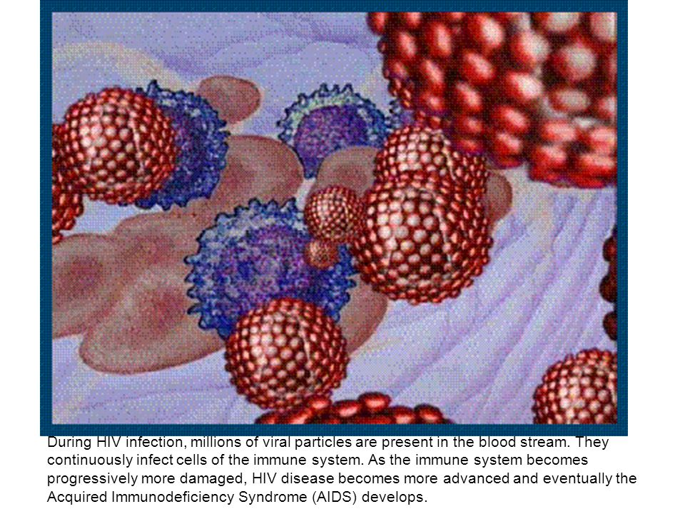 During HIV infection, millions of viral particles are present in the blood stream.