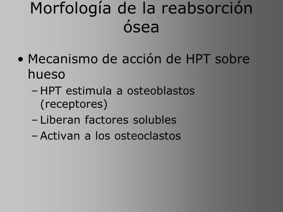Morfología de la reabsorción ósea Mecanismo de acción de HPT sobre hueso –HPT estimula a osteoblastos (receptores) –Liberan factores solubles –Activan