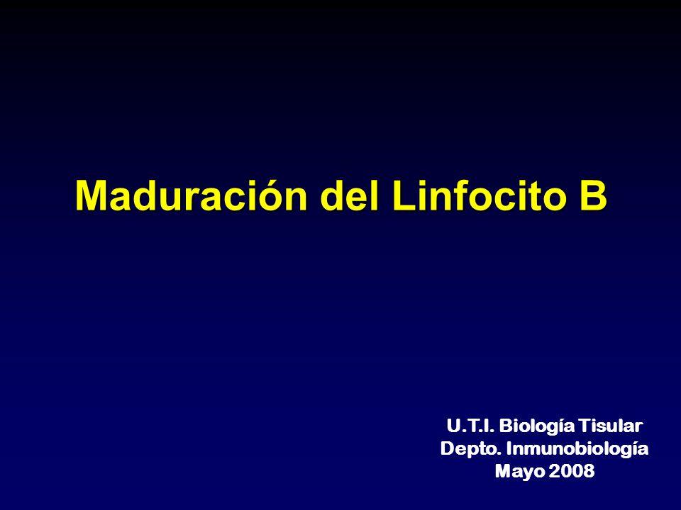 Maduración del Linfocito B U.T.I. Biología Tisular Depto. Inmunobiología Mayo 2008