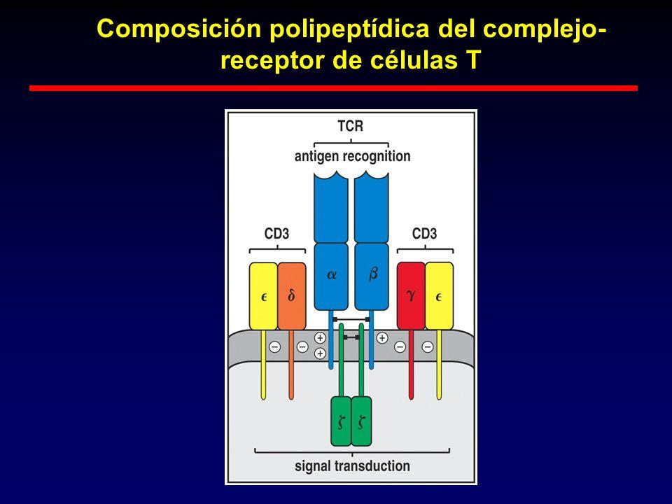 Composición polipeptídica del complejo- receptor de células T