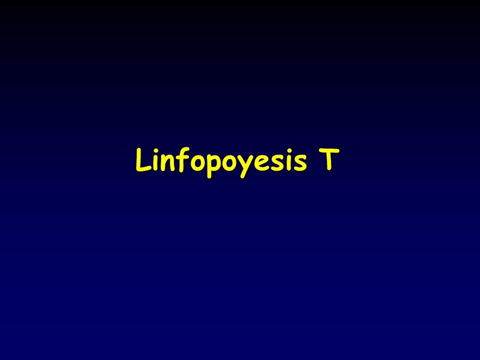 Linfopoyesis T