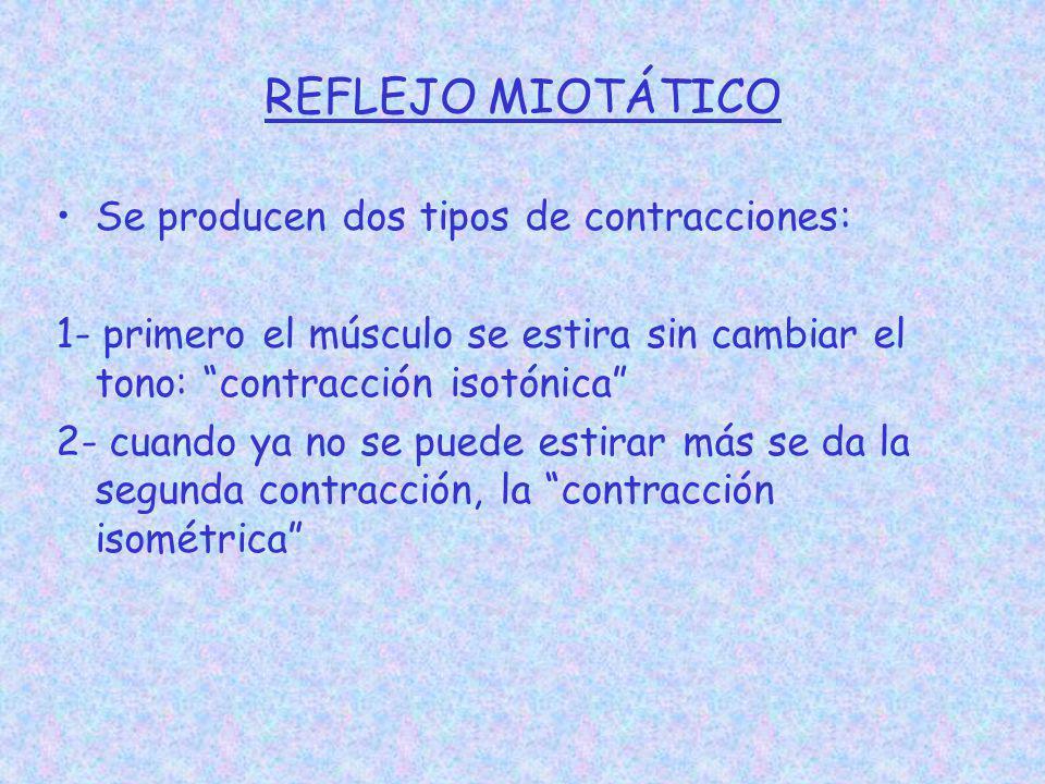 REFLEJO MIOTÁTICO Se producen dos tipos de contracciones: 1- primero el músculo se estira sin cambiar el tono: contracción isotónica 2- cuando ya no s