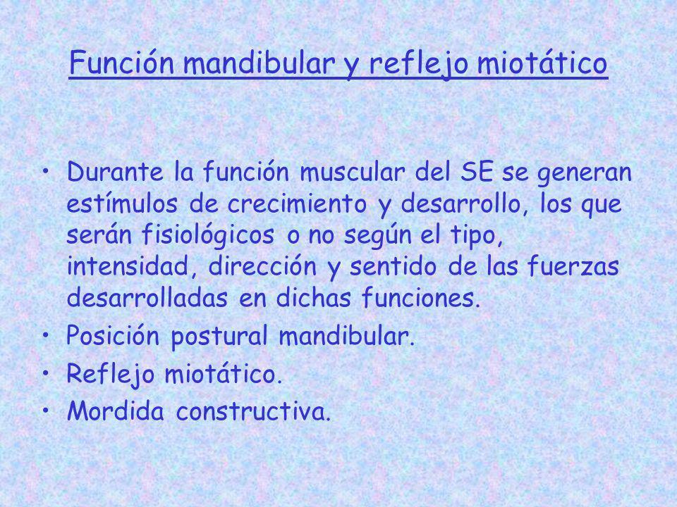 Función mandibular y reflejo miotático Durante la función muscular del SE se generan estímulos de crecimiento y desarrollo, los que serán fisiológicos
