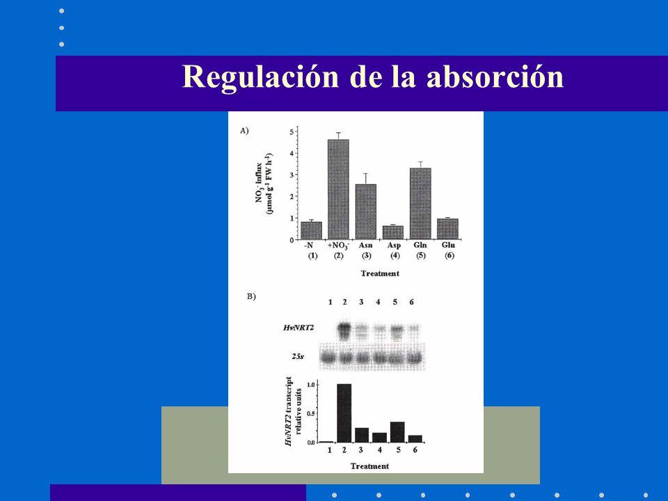 Regulación de la absorción