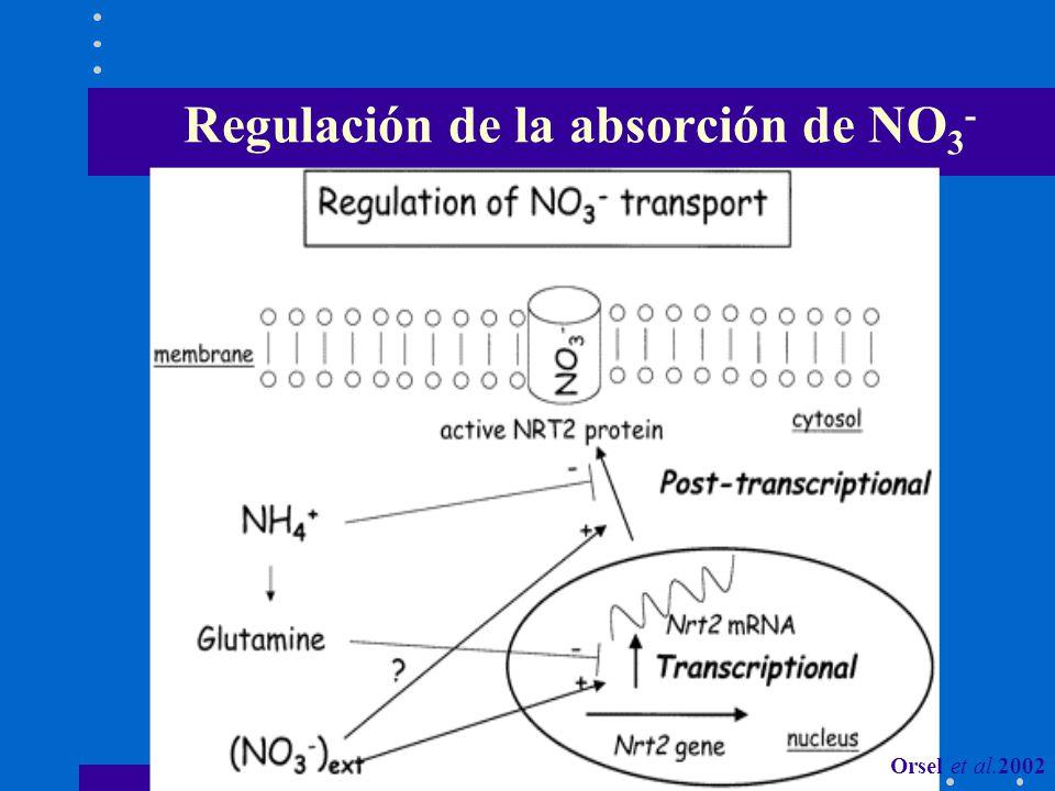 Regulación de la absorción de NO 3 - Orsel et al.2002