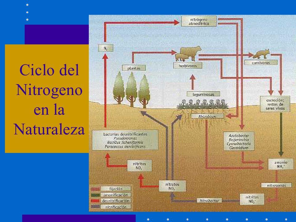 Ciclo del Nitrogeno en la Naturaleza