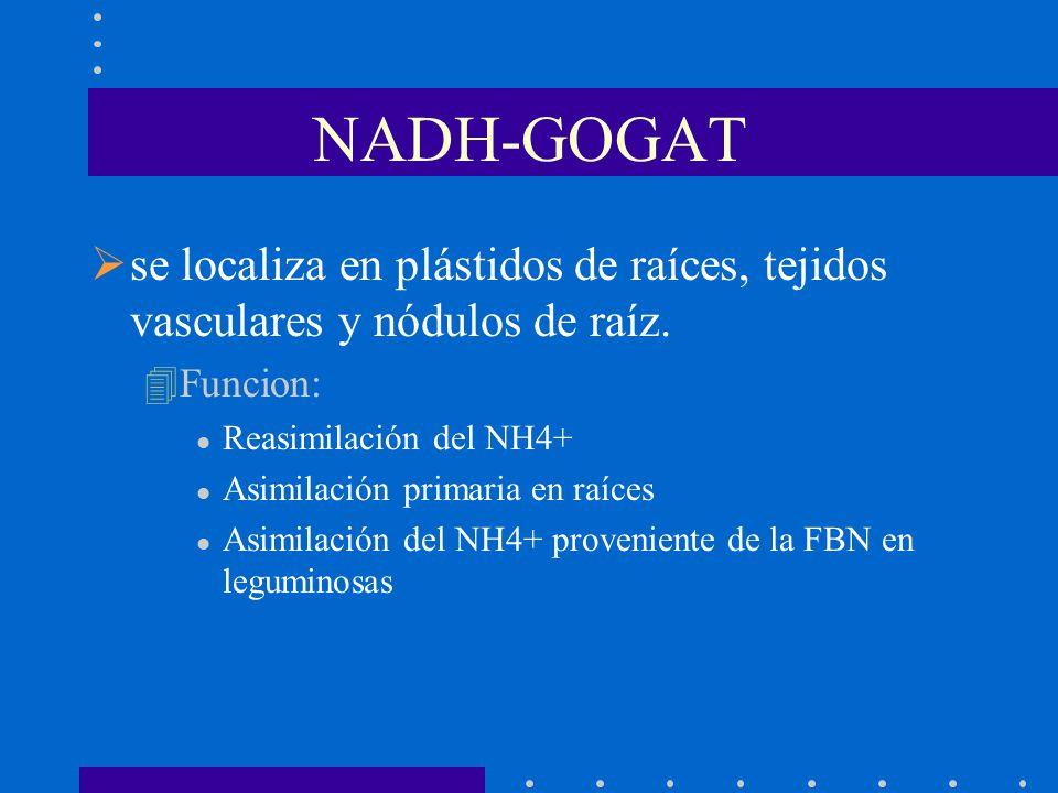 NADH-GOGAT se localiza en plástidos de raíces, tejidos vasculares y nódulos de raíz. 4Funcion: l Reasimilación del NH4+ l Asimilación primaria en raíc