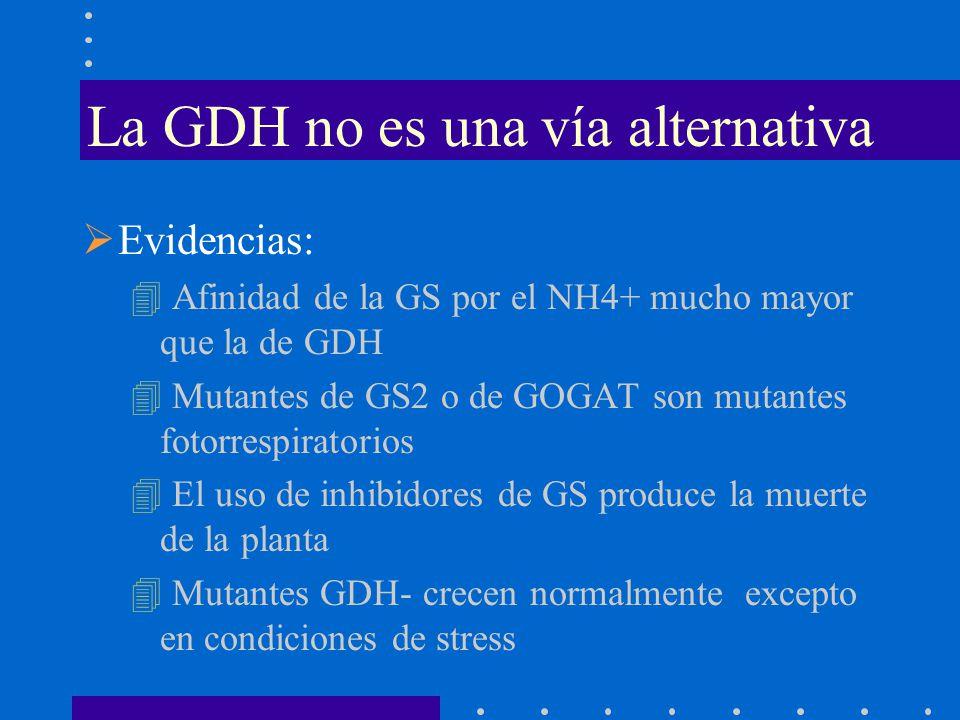 La GDH no es una vía alternativa Evidencias: 4 Afinidad de la GS por el NH4+ mucho mayor que la de GDH 4 Mutantes de GS2 o de GOGAT son mutantes fotor