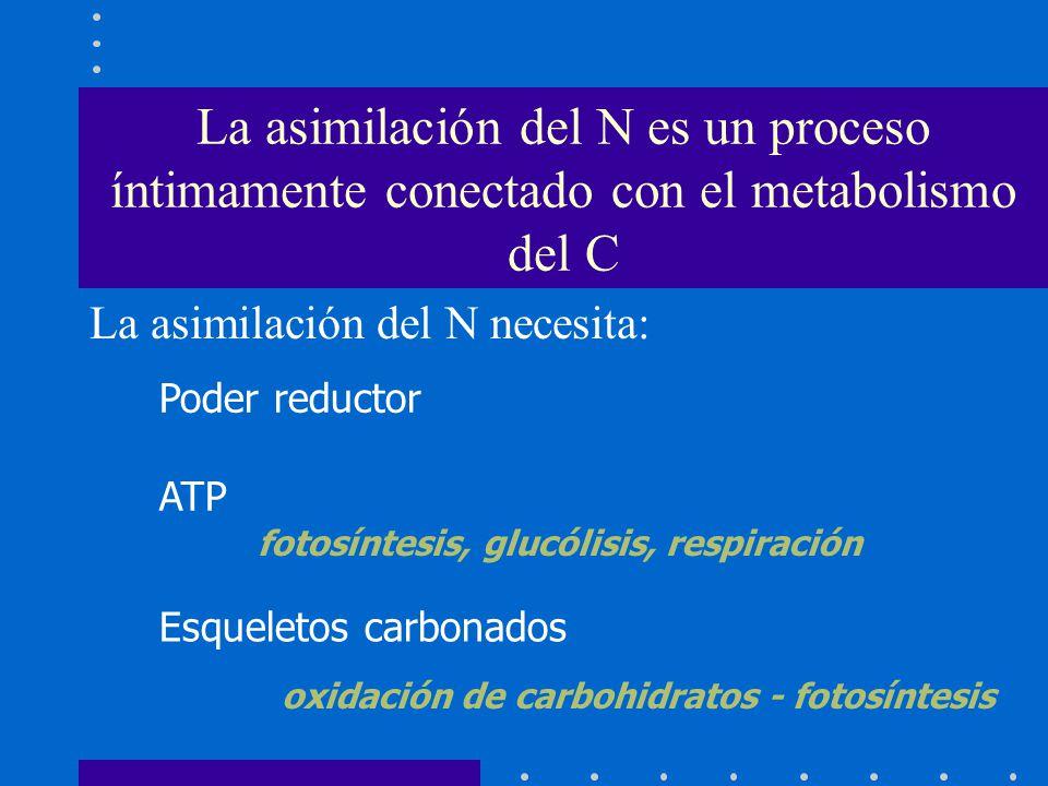 Poder reductor ATP Esqueletos carbonados fotosíntesis, glucólisis, respiración oxidación de carbohidratos - fotosíntesis La asimilación del N es un pr