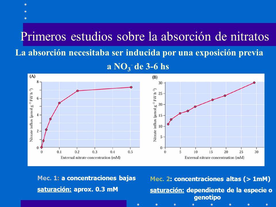 Primeros estudios sobre la absorción de nitratos Mec. 1: a concentraciones bajas saturación: aprox. 0.3 mM Mec. 2: concentraciones altas (> 1mM) satur