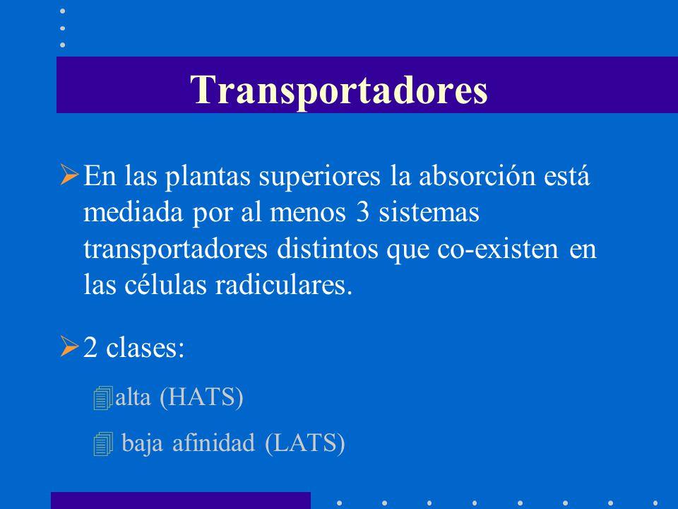 Transportadores En las plantas superiores la absorción está mediada por al menos 3 sistemas transportadores distintos que co-existen en las células ra
