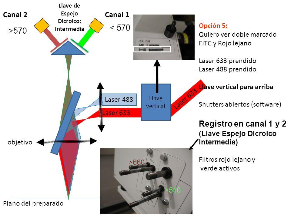 Laser 488 Laser 633 Llave vertical Opción 5: Quiero ver doble marcado FITC y Rojo lejano Laser 633 prendido Laser 488 prendido Llave vertical para arr