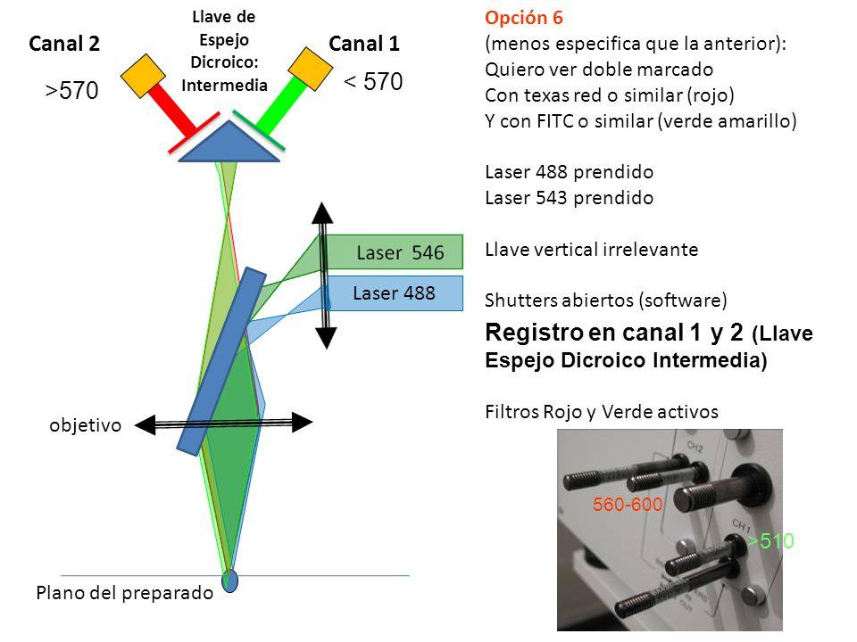 560-600 >510 Laser 488 objetivo Plano del preparado Opción 6 (menos especifica que la anterior): Quiero ver doble marcado Con texas red o similar (roj