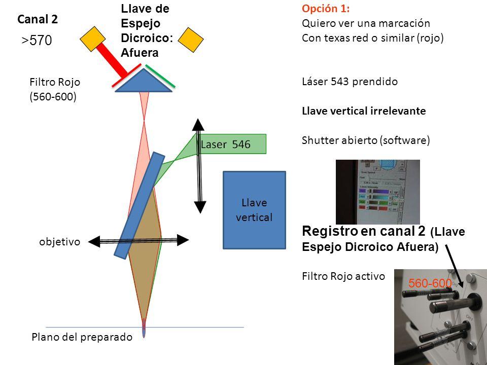 Laser 488 objetivo Plano del preparado Opción 2: Quiero ver una marcación Con FITC o similar (verde/amarillo) Laser 488 prendido Llave vertical irrelevante Shutter abierto (software) Registro en canal 1 (Llave Espejo Dicroico Adentro) Filtro Verde Activo Canal 1 >510 < 570 Llave de Espejo Dicroico: Adentro