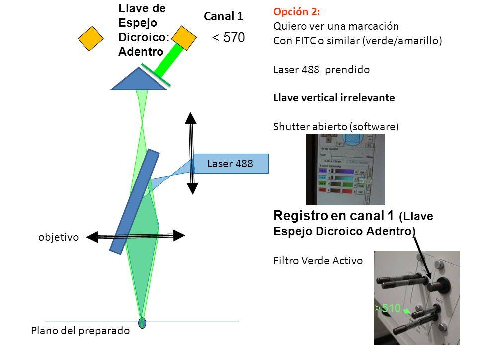 Laser 488 objetivo Plano del preparado Opción 2: Quiero ver una marcación Con FITC o similar (verde/amarillo) Laser 488 prendido Llave vertical irrele
