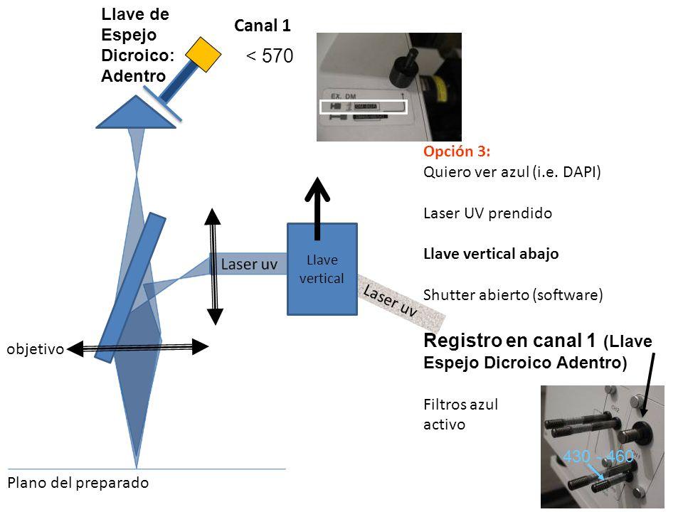 Opción 3: Quiero ver azul (i.e. DAPI) Laser UV prendido Llave vertical abajo Shutter abierto (software) Registro en canal 1 (Llave Espejo Dicroico Ade