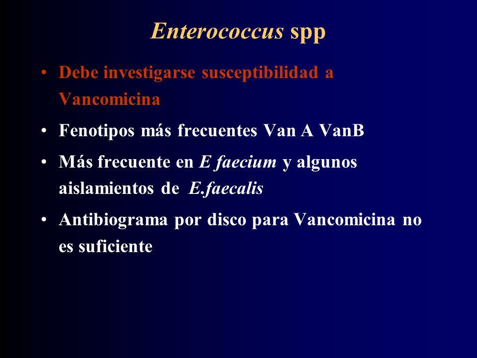 Enterococcus spp Debe investigarse susceptibilidad a Vancomicina Fenotipos más frecuentes Van A VanB Más frecuente en E faecium y algunos aislamientos