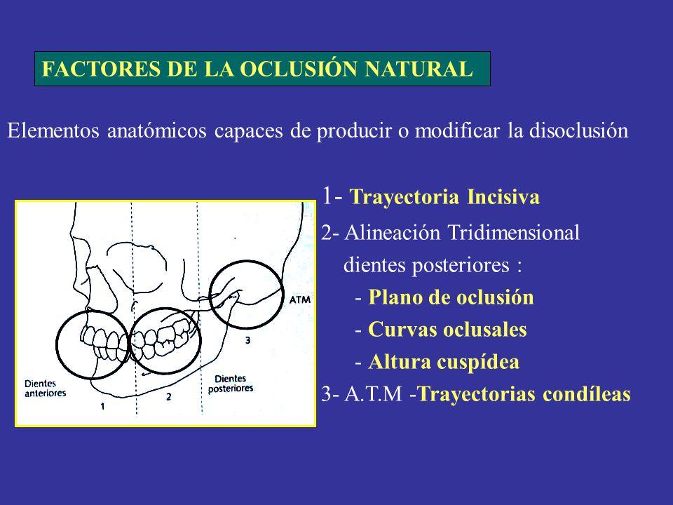 Elementos anatómicos capaces de producir o modificar la disoclusión 1- Trayectoria Incisiva 2- Alineación Tridimensional dientes posteriores : - Plano