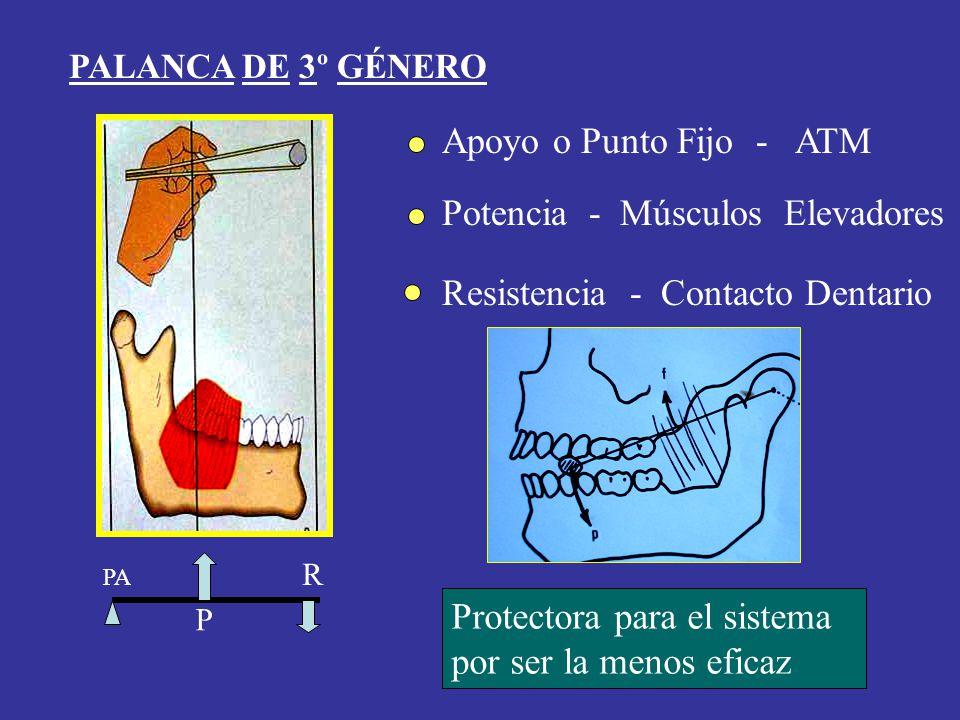 PALANCA DE 3º GÉNERO Apoyo o Punto Fijo - ATM Potencia - Músculos Elevadores Resistencia - Contacto Dentario Protectora para el sistema por ser la men