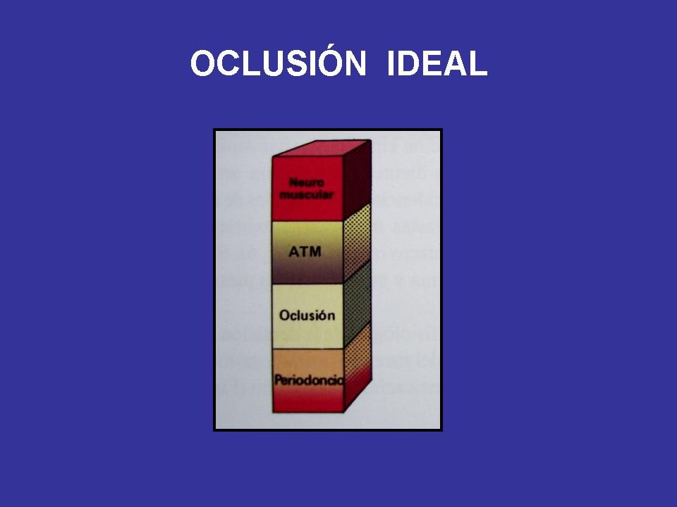 CARACTERÍSTICAS DE LA OCLUSIÓN IDEAL Coincidencia O.