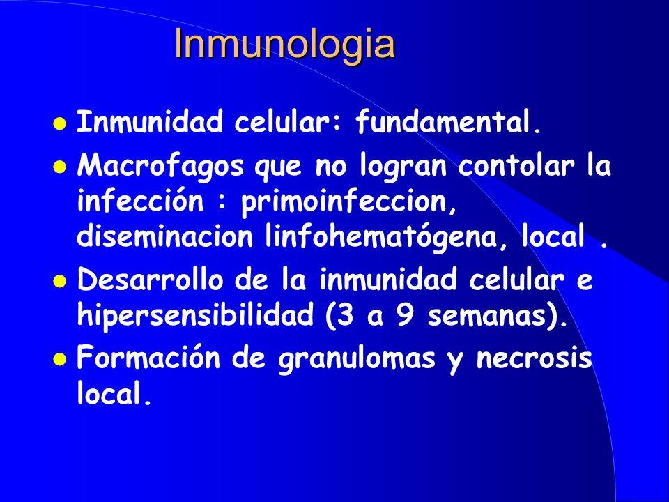 Patogenia l Bacilos aspirados l Llegada al alveolo l Multiplicación l Lobulo medio, subcortical (O 2 ) l Mácrofagos alveolares l Llegada de linfocitos y monocitos l Llegada de macrófagos a ganglios regionales l Eventualmente diseminación hemática (ápice pulmonar, hueso, riñones)