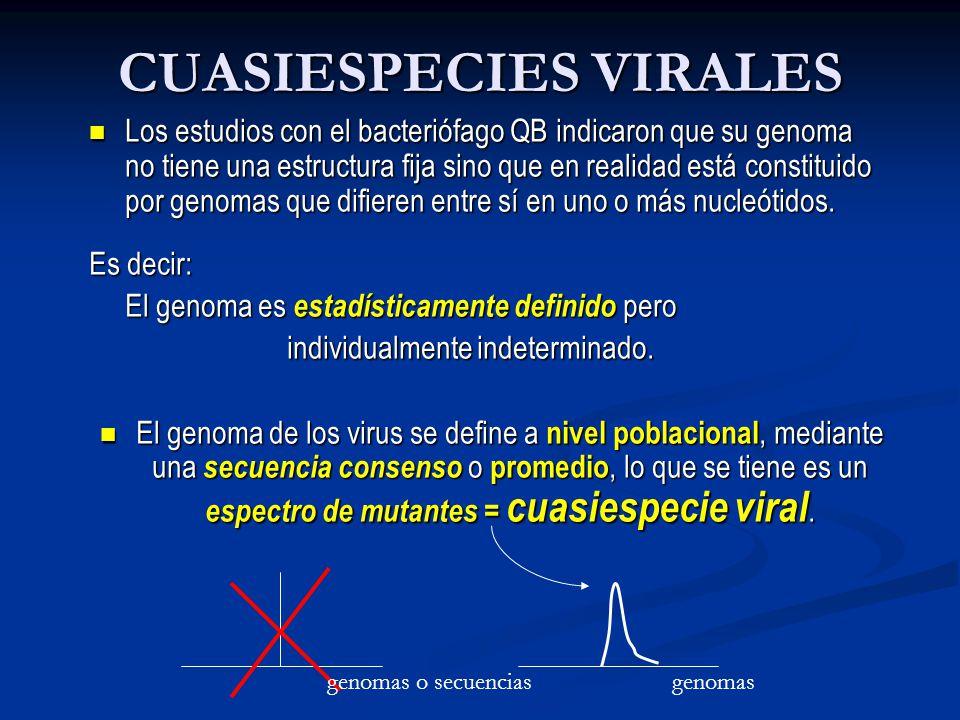 CUASIESPECIES VIRALES Los estudios con el bacteriófago QB indicaron que su genoma no tiene una estructura fija sino que en realidad está constituido por genomas que difieren entre sí en uno o más nucleótidos.