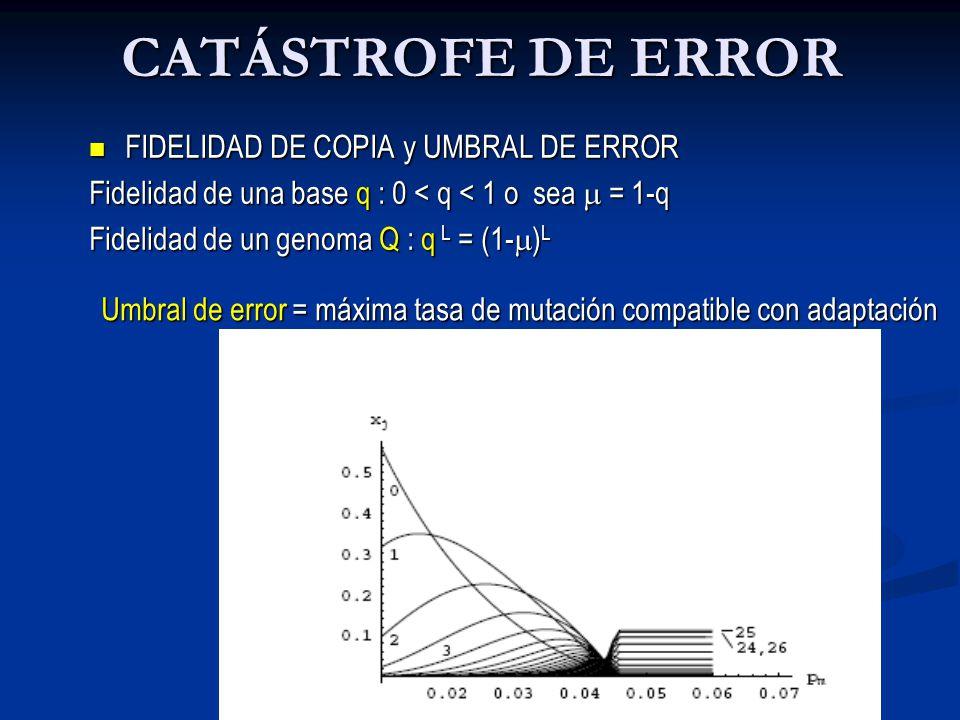 CATÁSTROFE DE ERROR FIDELIDAD DE COPIA y UMBRAL DE ERROR FIDELIDAD DE COPIA y UMBRAL DE ERROR Fidelidad de una base q : 0 < q < 1 o sea = 1-q Fidelidad de un genoma Q : q L = (1- ) L Umbral de error = máxima tasa de mutación compatible con adaptación µ c Umbral de error = máxima tasa de mutación compatible con adaptación µ c 1/L Espacio de Secuencias µ < µ c µ < µ c 1/L µ > µ c µ > µ c 1/L