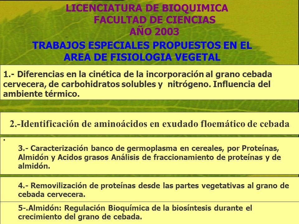 2.-Identificación de aminoácidos en exudado floemático de cebada LICENCIATURA DE BIOQUIMICA FACULTAD DE CIENCIAS AÑO 2003 TRABAJOS ESPECIALES PROPUEST