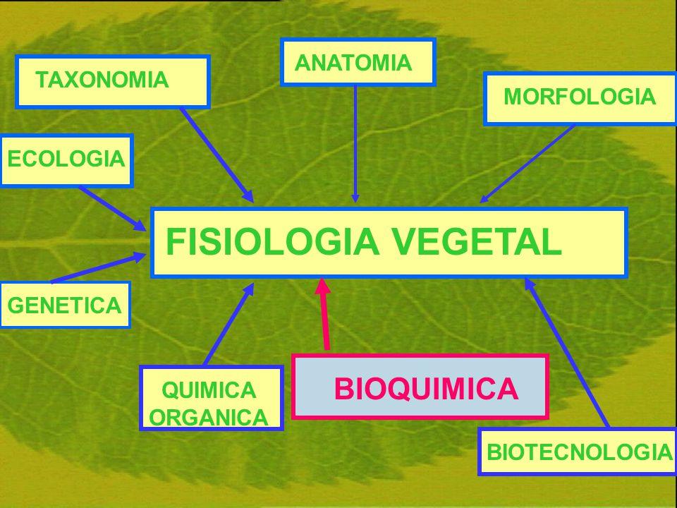 FISIOLOGIA VEGETAL ANATOMIAGENETICAMORFOLOGIAECOLOGIATAXONOMIA BIOQUIMICA BIOTECNOLOGIA QUIMICA ORGANICA