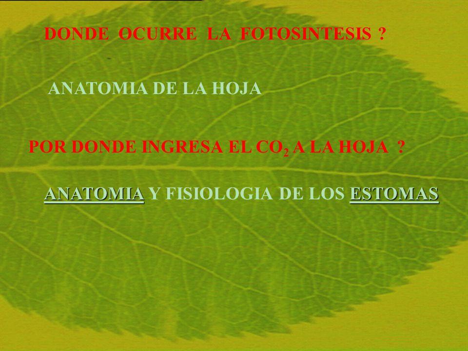 DOCENTES DEL CURSO Víctor J.MARTIN, Prof. Adj. Gr.3 del C.I.N.-Facultad de Ciencias.