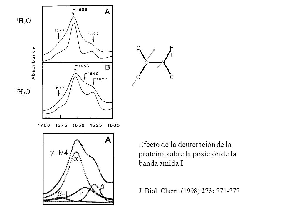 1H2O1H2O 2H2O2H2O Efecto de la deuteración de la proteína sobre la posición de la banda amida I J. Biol. Chem. (1998) 273: 771-777
