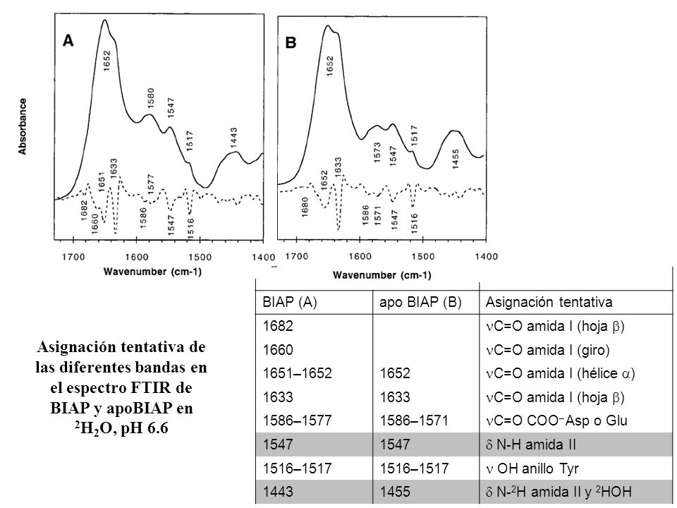 BIAP (A)apo BIAP (B)Asignación tentativa 1682 C=O amida I (hoja ) 1660 C=O amida I (giro) 1651–16521652 C=O amida I (hélice ) 1633 C=O amida I (hoja )