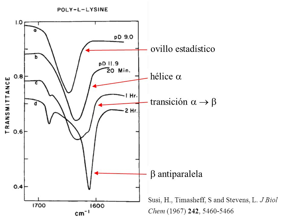antiparalela hélice transición ovillo estadístico Susi, H., Timasheff, S and Stevens, L. J Biol Chem (1967) 242, 5460-5466