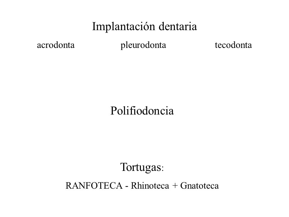 Implantación dentaria acrodonta pleurodonta tecodonta Polifiodoncia Tortugas : RANFOTECA - Rhinoteca + Gnatoteca