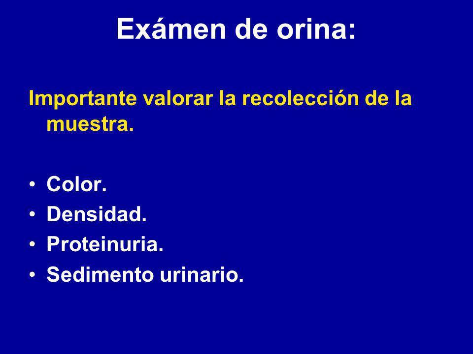 Evaluación funcional y patológica del riñón Examen de orina: Creatinemia sérica.