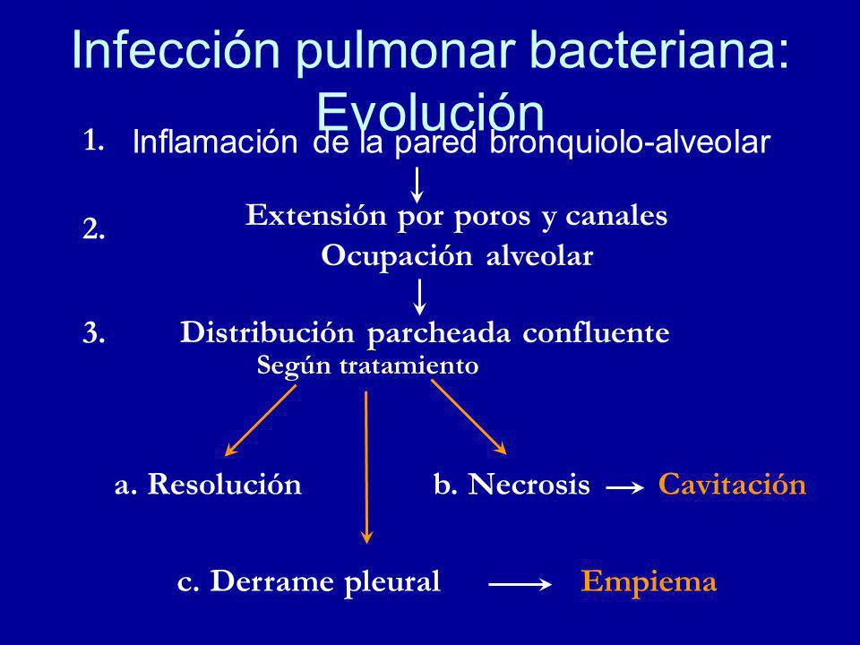 Infección pulmonar bacteriana: Evolución Inflamación de la pared bronquiolo-alveolar Extensión por poros y canales Ocupación alveolar Distribución parcheada confluente a.