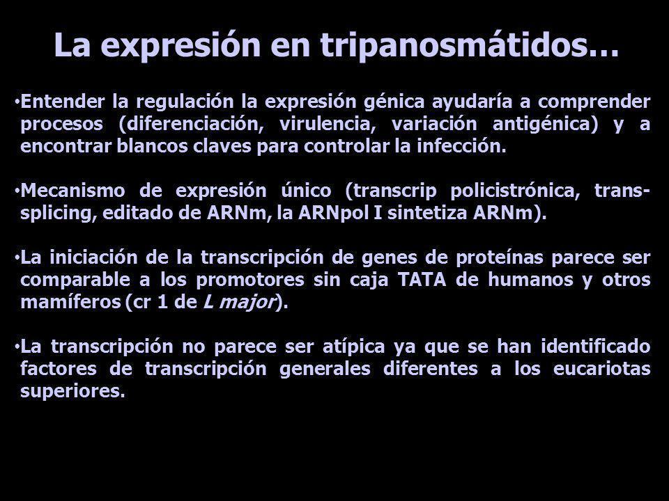 La expresión en tripanosmátidos… Entender la regulación la expresión génica ayudaría a comprender procesos (diferenciación, virulencia, variación anti