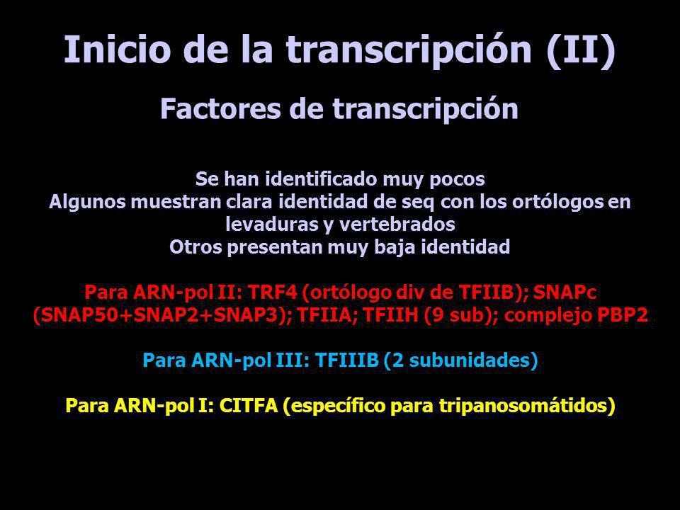 Inicio de la transcripción (II) Se han identificado muy pocos Algunos muestran clara identidad de seq con los ortólogos en levaduras y vertebrados Otr