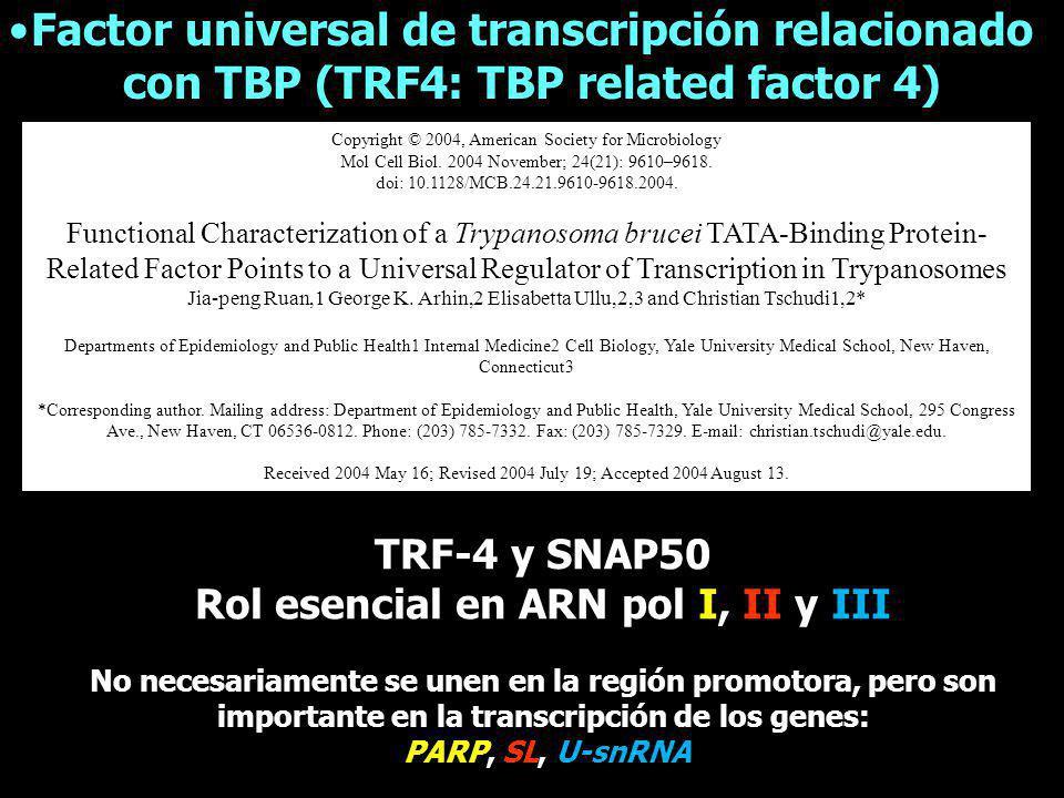 Transcribe ARN pequeños (5S, tARNs, 7SL-ARN y todos snARN) usando snARN Básicamente presenta los mismos promotores que eucariotas superiores: estar tanto en la región 3 como 5 Promotor para ARN-pol III DSE PSE TATA DSE PSE TATA Tipo III AC Tipo I AB Tipo II Punto de inicio ARNr 5S ARNt U2-U6 TSS